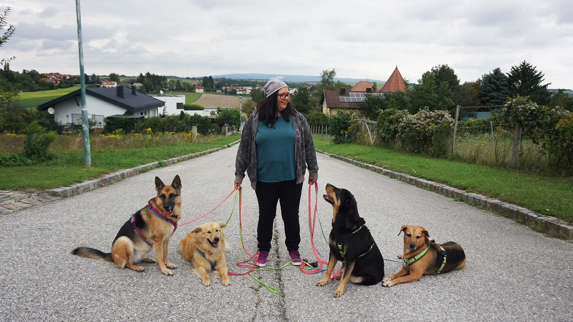 Hunde, meine Leidenschaft